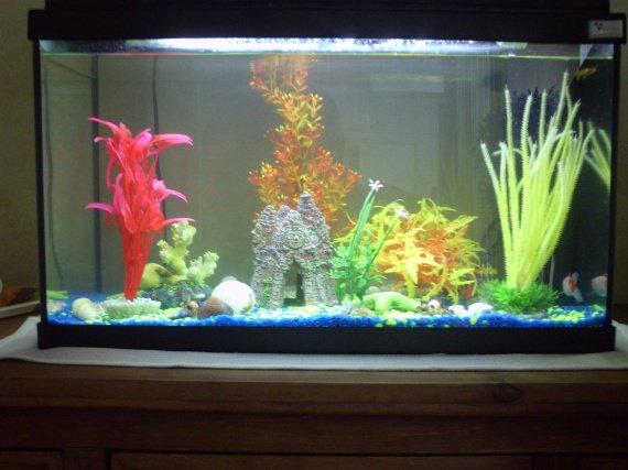 Eau trouble de laquarium - Aquariums et vivariums - FORUM Animaux