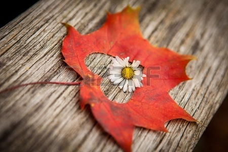 rien-zazzy-16158811-automne-decoupe-img