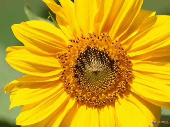 rien-zazzy-soleil-automne-visoflora-img