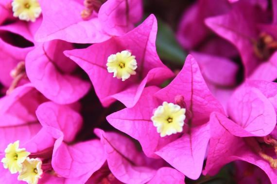 espagne-jardin-botanique-roig-img