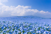 2_beautiful_blue_flower_garden_japan