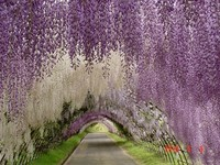 1-Hitachi-wisteria-tunnel-garden-design
