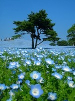 2-hitachi-seaside-park-japan-24-photos-15