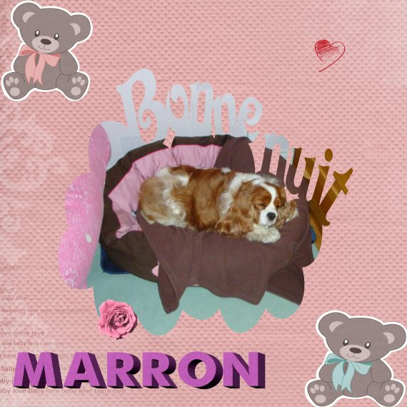 Marron 1an