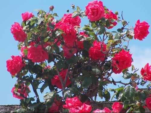 fleur05.jpg4.
