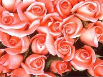 bouquet de roses roses.jpg2.