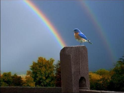 petit oiseau arc en ciel.jpg1.