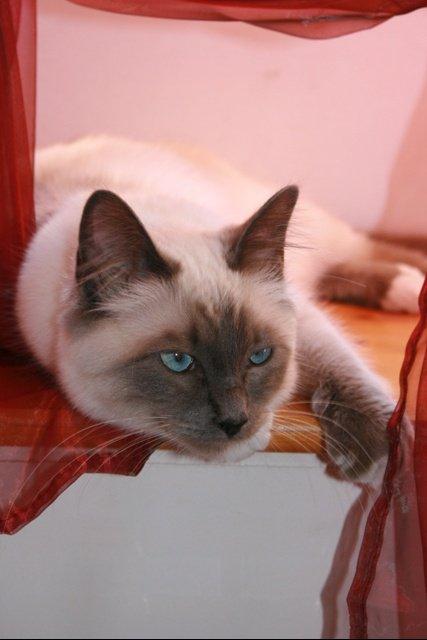 Notre chatte, Babouchka !