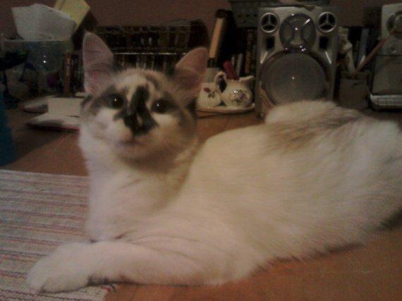 chatte qui urine sur le lit chats forum animaux. Black Bedroom Furniture Sets. Home Design Ideas