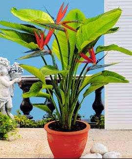 Ma commande de plantes de fleurs nellheil doctissimo for Commande de plantes