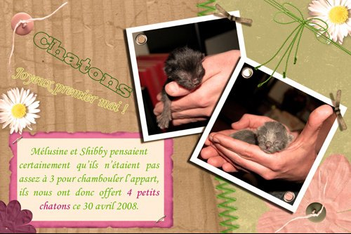 fp_chatons_small
