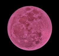 lune rose 2