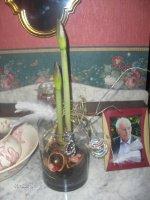 noel 2010 007 mon amarylis dédiée a papa