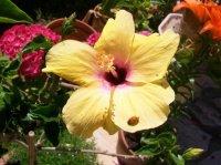 beaux-cliches-papillon-005-img grem