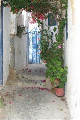tunisie-senteur-jasmin-plus-belles-photos-tunisie_297781