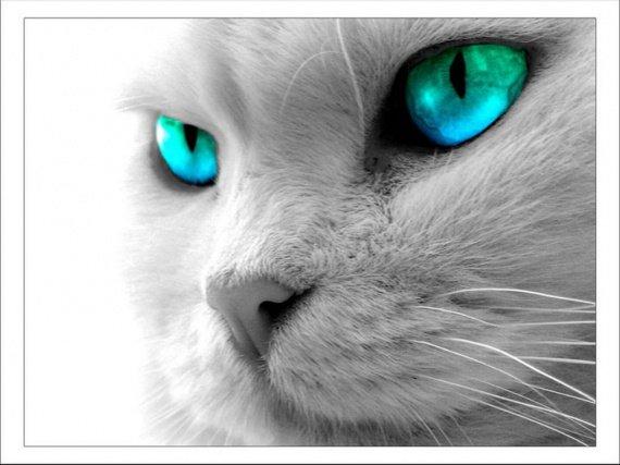 1248-yeux-bleus-verts-WallFizz