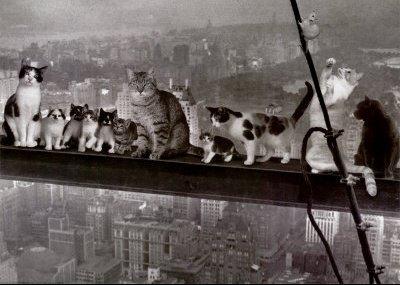 cats-o10
