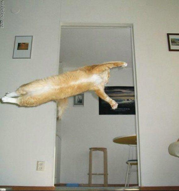 chat-volant