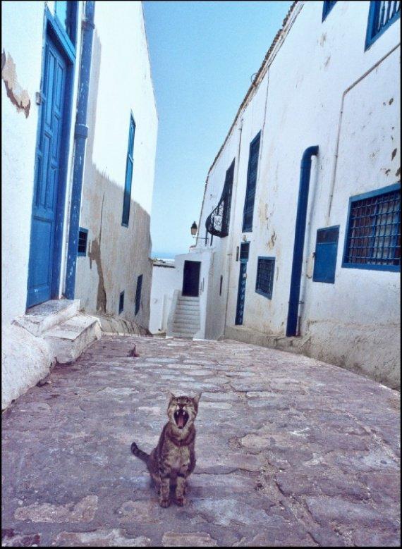 tunisie_chat_qui_bailledxo