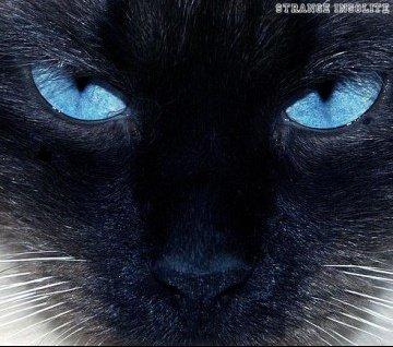 medium_chat-yeux-bleus_15884c