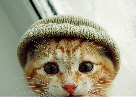 Chat-bonnet