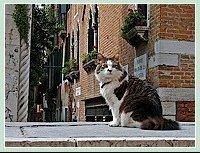 0429b-chat-venitien-pont-molin-de-la-racheta-venise-2