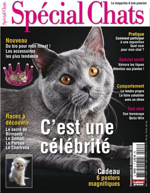 special-chat-couv
