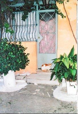 athenes-promenade-plaka-plus-belles-photos-grece_285705