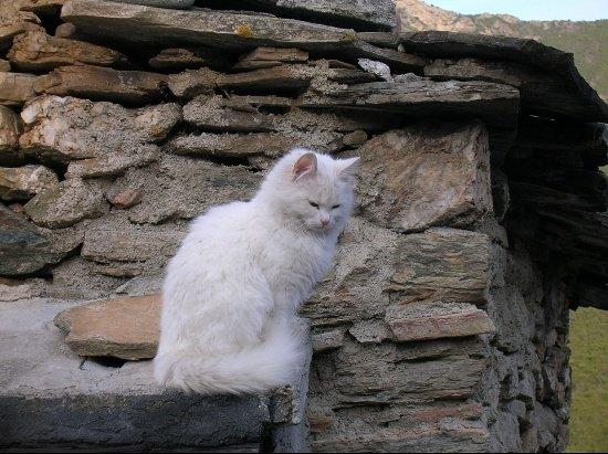 autres-chats-noceta-france-1211054780-1134996