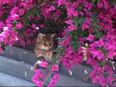voila-chat-heureux-envoyez-photo-plus-craquante-animal_346180