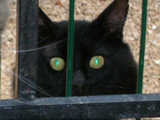 autres-animaux-autres-chats-nice-france-5147210956-928667