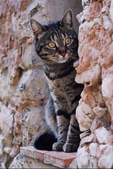 autres-animaux-autres-chats-nice-france-7883569599-15930