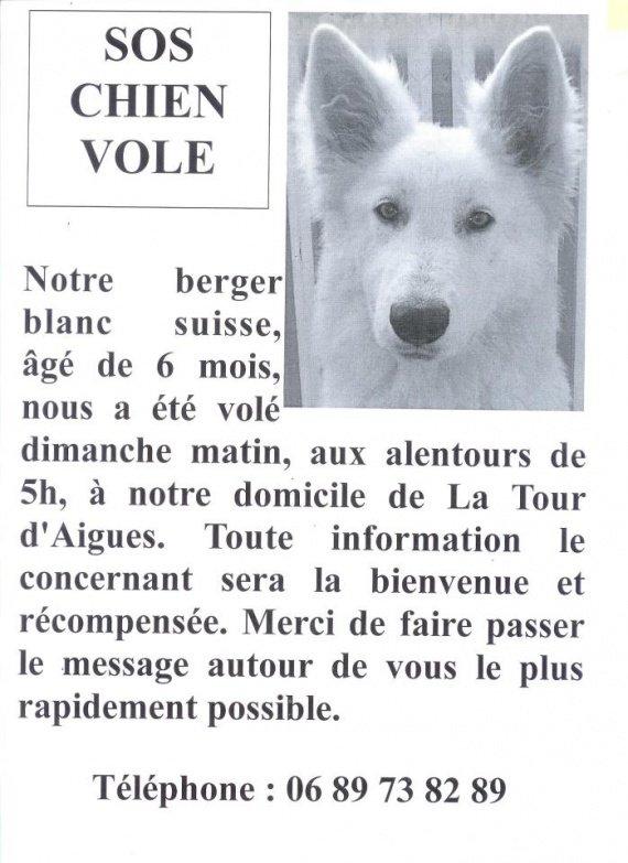 chien disparu