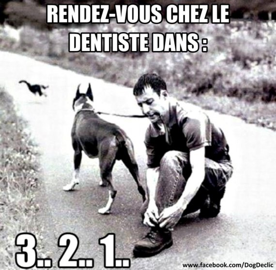 attention un chat