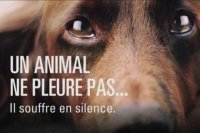 animal souffre en silence