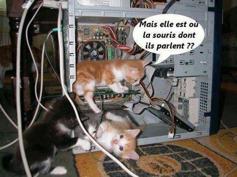 les chats dans l'ordi
