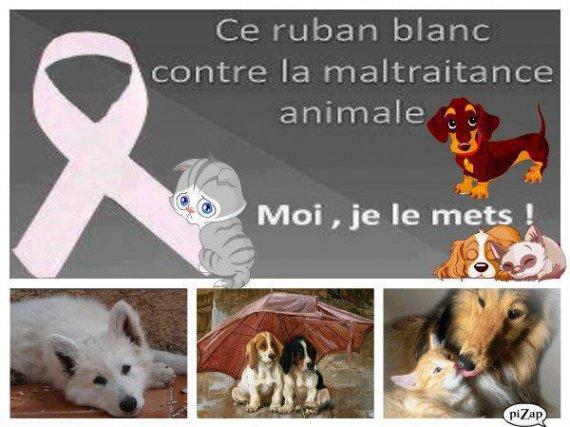 ruban blanc contre maltraitance animale