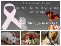 ruban blanc contre maltraitance animale