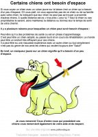 certains chiens ont besoin d'espacee