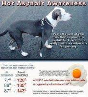 température du sol