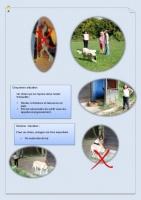 conseil chien3