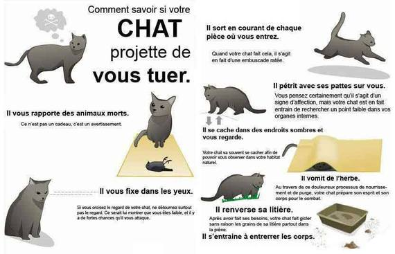 attention à votre chat