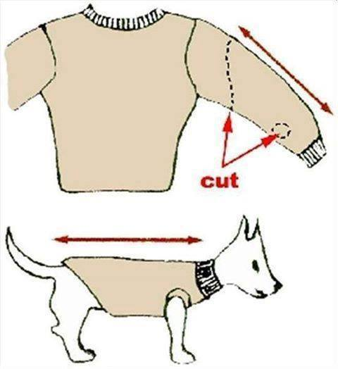 pull pour petits chiens