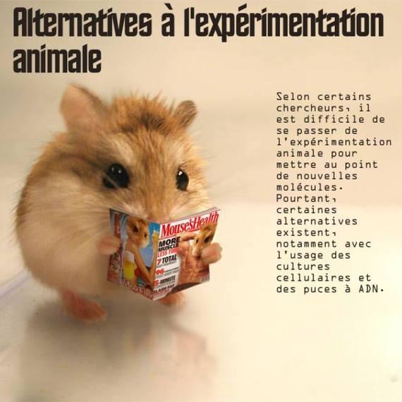 expérimentations animales