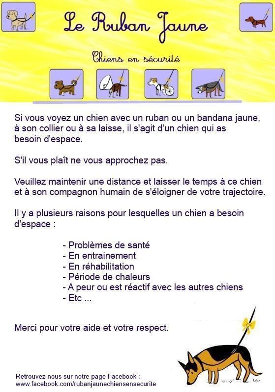 DINOS: le ruban jaune pour les chiens qui ont besoin d'espace  - Page 6 Chiens-ruban-jaune-img