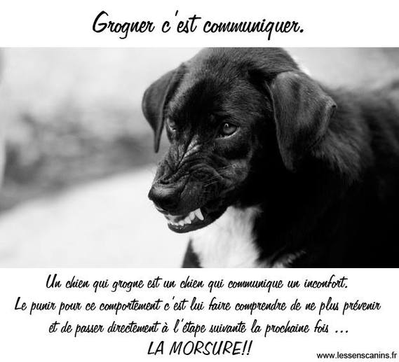 Chiot: punition (gronder) et grognements - Page 5 Chiens-grogner-img