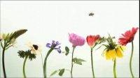 Ne tuer pas nos abeilles
