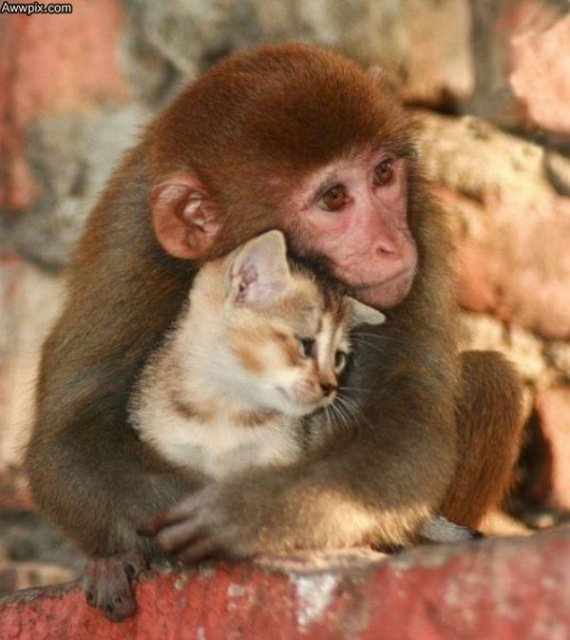 singe et chat