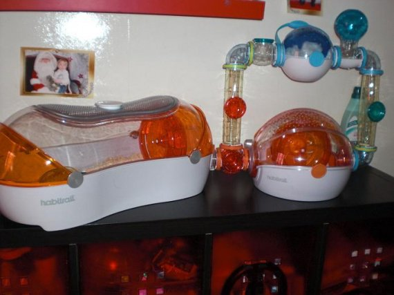 animaux hamsters lapins cage hamster dore sujet