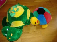 grosse tortue 8e, l'autre 3e